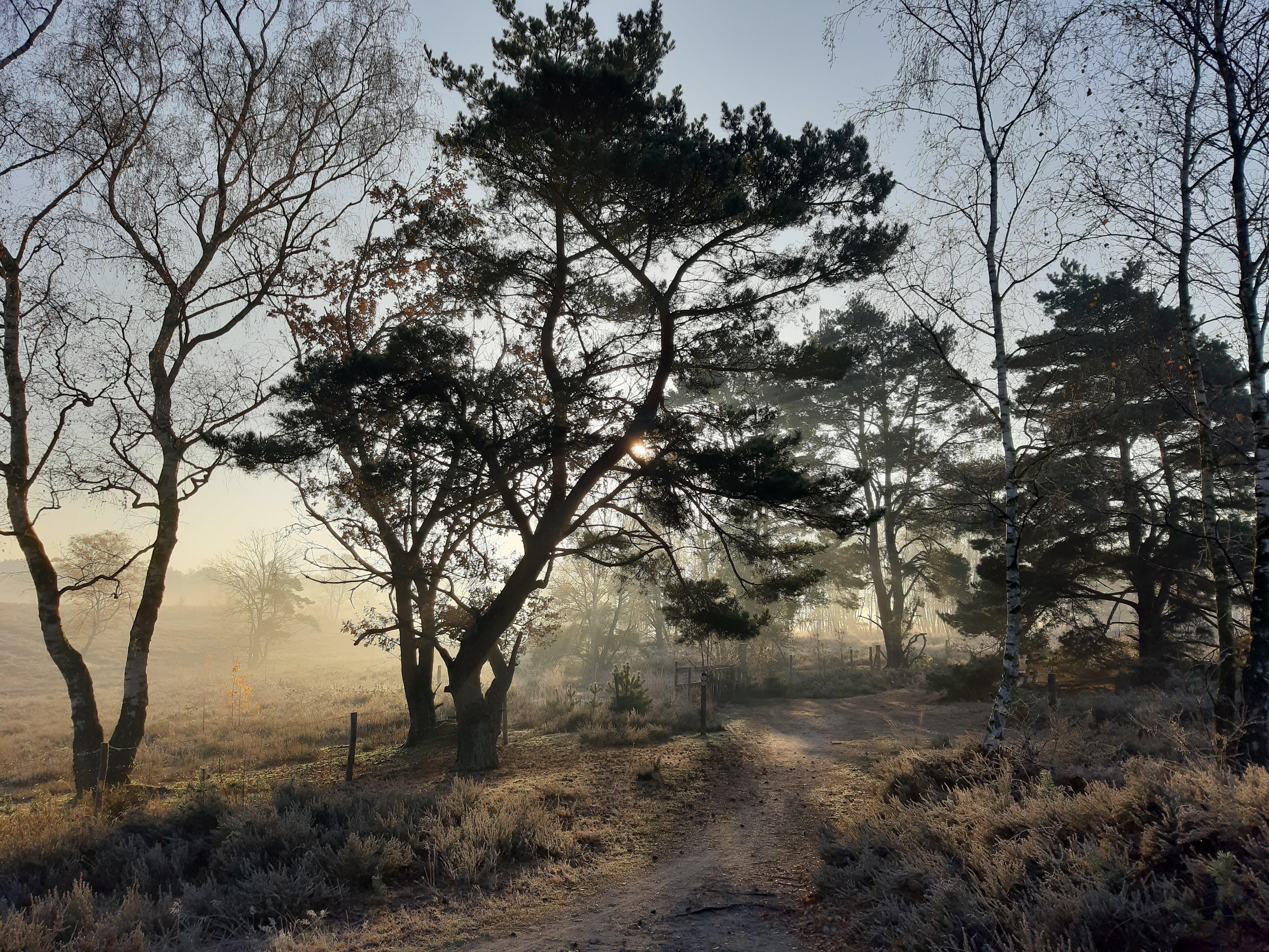 Zie je door de bomen het bos niet meer? Nieuwe normen, eisen voor 2020
